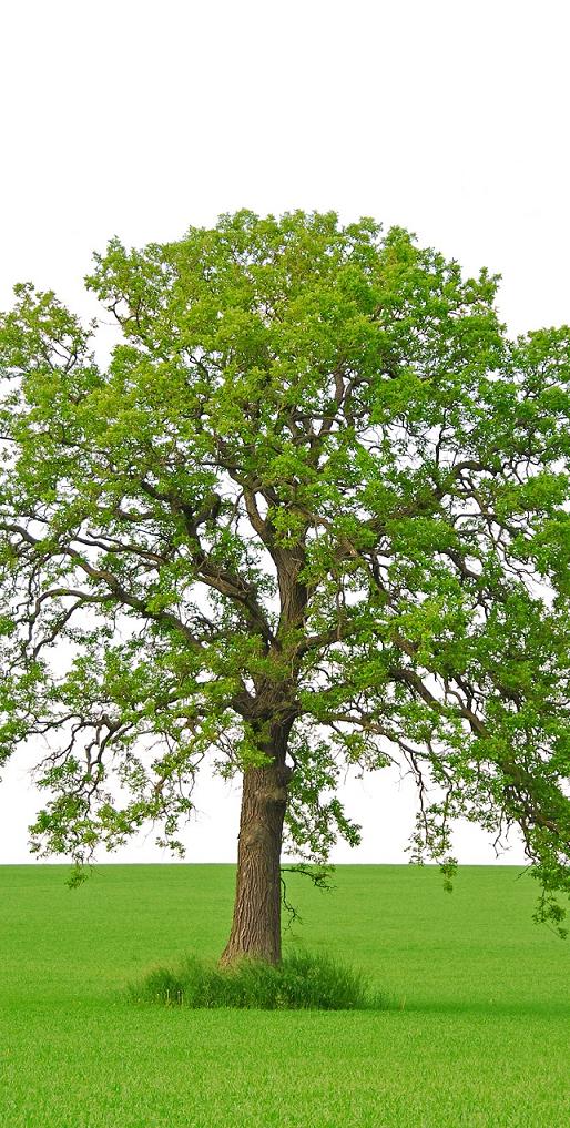 Træ med græs