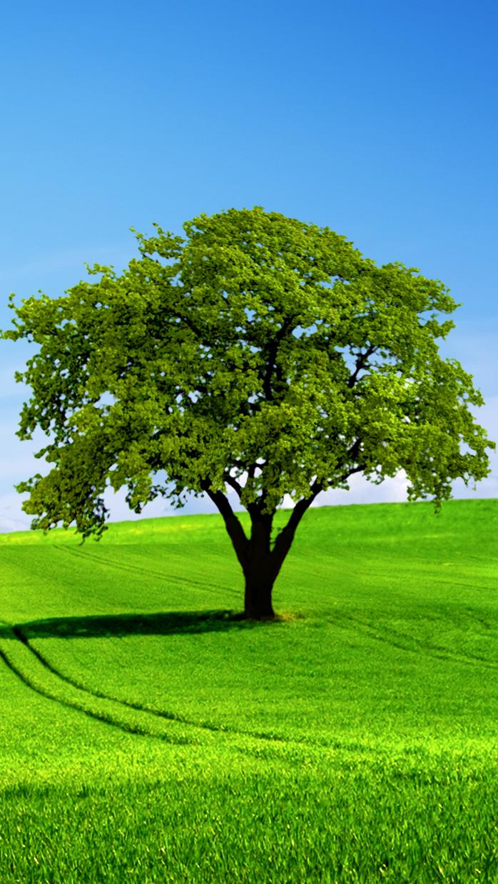 Træ på mark